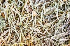 mrożona tła trawy Obraz Stock