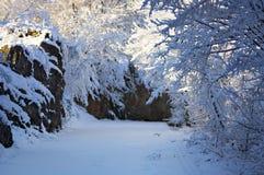 mrożona wymienionego stosowanie stabilizatora nigth drzew drogowej uliczna śniegu zima Fotografia Royalty Free