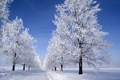 mrożone drzewa zdjęcia stock