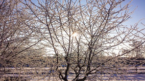 mrożone drzewa Zdjęcie Stock