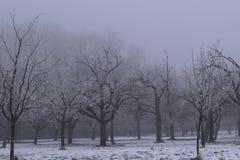 Mrożenie mistyczki drzewa Fotografia Royalty Free