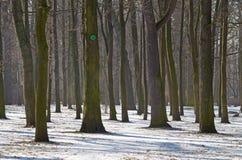 mroźna krajobrazowa zima Obrazy Royalty Free