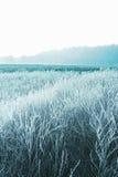 mroźna krajobrazowa zima Zdjęcie Royalty Free