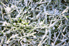 mroźna trawa Zdjęcie Royalty Free
