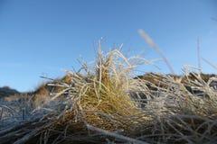Mroźna trawy wersja 2 Fotografia Royalty Free