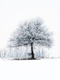 mroźny drzewo Obrazy Stock