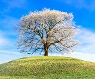 Mroźny drzewo Zdjęcia Royalty Free