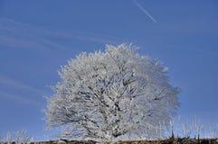 Mroźny drzewo na niebie Zdjęcia Royalty Free