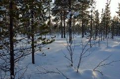 Mroźny krajobraz w szwedach Lapland Zdjęcie Stock