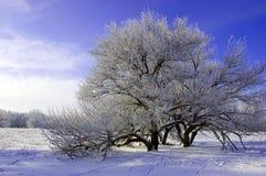 mroźny ranek Fotografia Royalty Free
