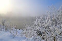 Mroźny ranek na jeziorze, mgle i mrozie na trawie, zdjęcie stock