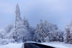Mroźny zima ranek Obrazy Royalty Free
