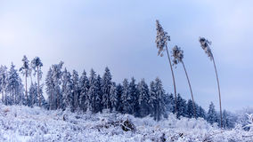 Mroźny zima ranek Fotografia Royalty Free