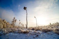 Mroźny zima ranek Obraz Stock