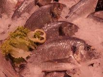 mrożona ryba fotografia royalty free