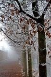 mrożone drzewa Zdjęcie Royalty Free
