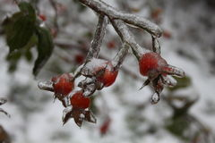 mrożone owoce Obrazy Royalty Free