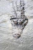 mroczna aligator woda Zdjęcia Royalty Free