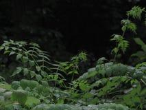 mroczne lasu Zdjęcia Royalty Free