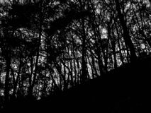 mroczne lasu obraz stock