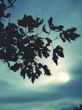 mroczny dzień niebieski oddział stać się drzew zimy śnieżną nieba Zdjęcie Stock