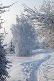 mroczny dzień niebieski oddział stać się drzew zimy śnieżną nieba Fotografia Royalty Free