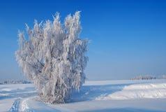 mroczny dzień niebieski oddział stać się drzew zimy śnieżną nieba Obraz Royalty Free