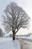 mroczny dzień niebieski oddział stać się drzew zimy śnieżną nieba Obraz Stock