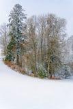 mroczny dzień niebieski oddział stać się drzew zimy śnieżną nieba Obrazy Stock