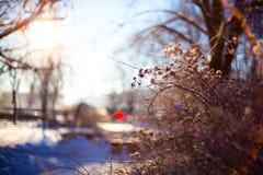 mroczny dzień niebieski oddział stać się drzew zimy śnieżną nieba Zdjęcia Stock