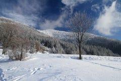 mroczny dzień niebieski oddział stać się drzew zimy śnieżną nieba Zdjęcie Royalty Free