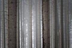Mroczny lasowy tło Obrazy Stock