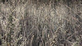 Mroźnego ranku łąkowa trawa w świetle słonecznym 4K zbiory