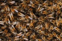 Mrowie pszczoły na roju Wiele pszczoły w postaci tekstury w górę Makro- obrazy stock