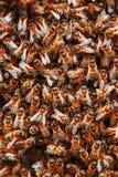Mrowie pszczoły na roju Wiele pszczoły w postaci tekstury w górę Makro- obraz stock