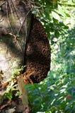 Mrowie pszczoły Fotografia Stock
