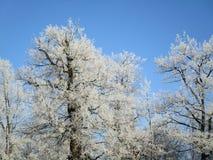 Mrozów drzewa Zdjęcia Royalty Free