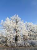 Mrozów drzewa Obrazy Stock
