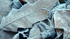 mrozów zakrywający liść zbiory wideo