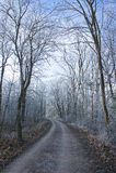 Mrozowa lasowa zima Grudnia droga Zdjęcie Stock