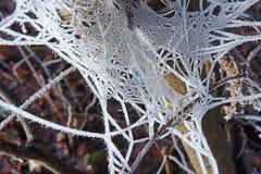 Mrozowa spiderweb drzewa zima Zdjęcia Stock