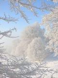 Mrozowi prac drzewa Zdjęcia Stock