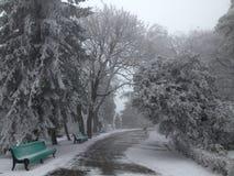 Mrozowy park Zdjęcie Stock