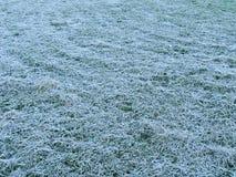 mrozowy trawę hoar Obrazy Stock