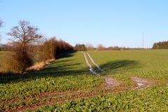 Mrozy pokrywający ślada na polu Zdjęcie Stock