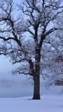 Mrozy zakrywający drzewa przeciw niebieskiemu niebu fotografia stock