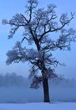 Mrozy zakrywający drzewa przeciw niebieskiemu niebu obraz royalty free
