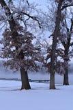 Mrozy zakrywający drzewa przeciw niebieskiemu niebu obraz stock