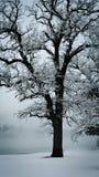 Mrozy zakrywający drzewa przeciw zimy niebu zdjęcia royalty free