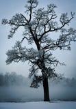 Mrozy zakrywający drzewa przeciw zimy niebu fotografia stock